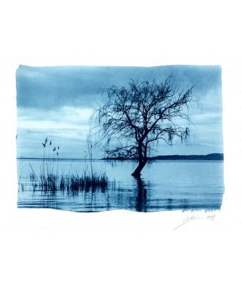 Albero in acqua - Lago...