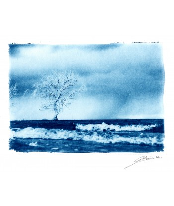 L'albero e la tempesta