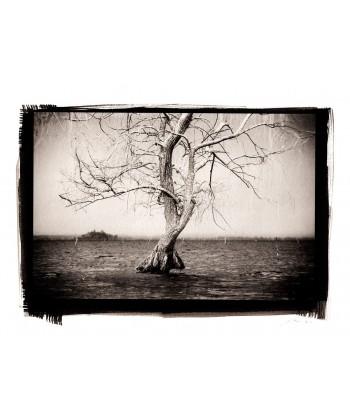 L'albero sospeso