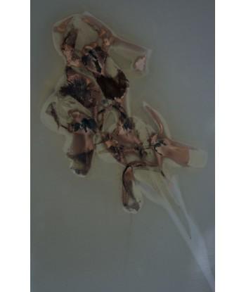 Iris fiorentina _2