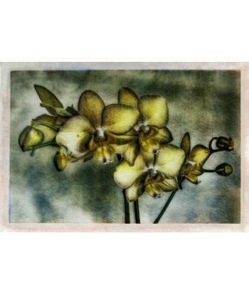 Orchidèe_2